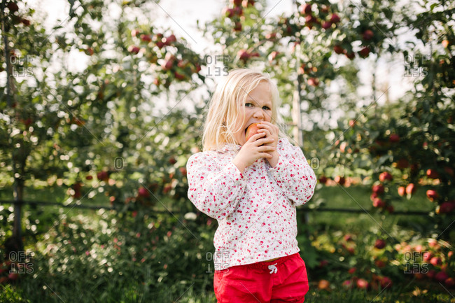 Little blonde girl with blue eyes eating an apple in an orchard