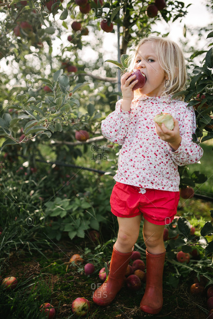 Portrait of a blonde girl with blue eyes eating an apple in an orchard