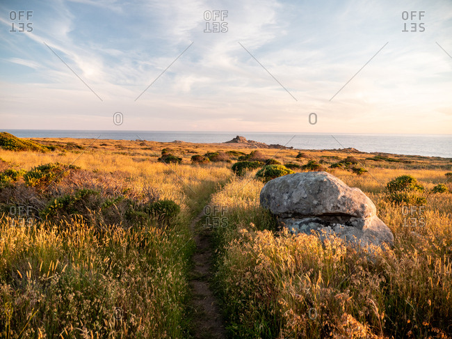 Coastal trail through meadow