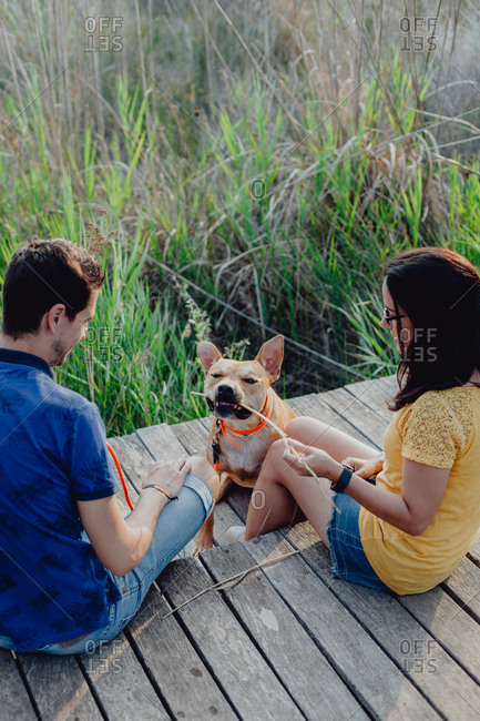 From behind of happy casual young man and woman sitting while playful brown dog chewing stick at wooden construction in rural countryside in daylight