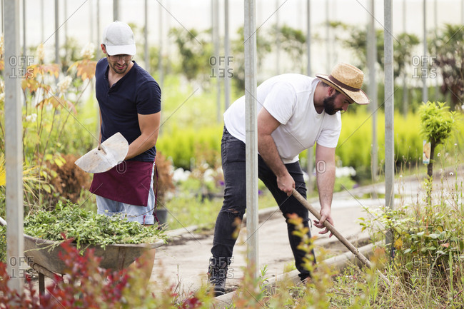 Two young men working in the greenhouse