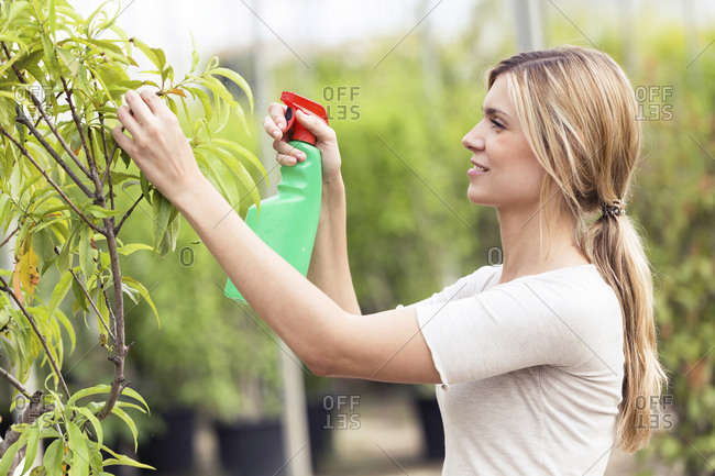 Beautiful young woman taking care of a plant in the greenhouse