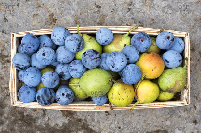 Harvest- plums and pears in basket