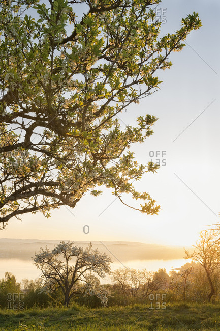 Germany- Baden-Wurttemberg- Lake Constance and trees at sunrise