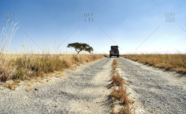 Off-road vehicle driving on a dirt road in a typical African savannah landscape- Makgadikgadi Pans- Botswana