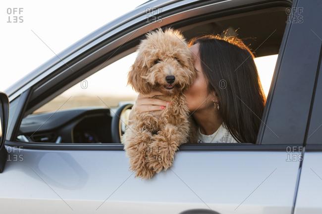 Woman sitting in driver's seat of car with a golden-doodle puppy