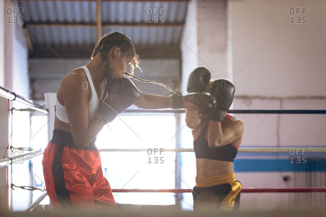 Female boxers fighting in boxing ring at fitness center