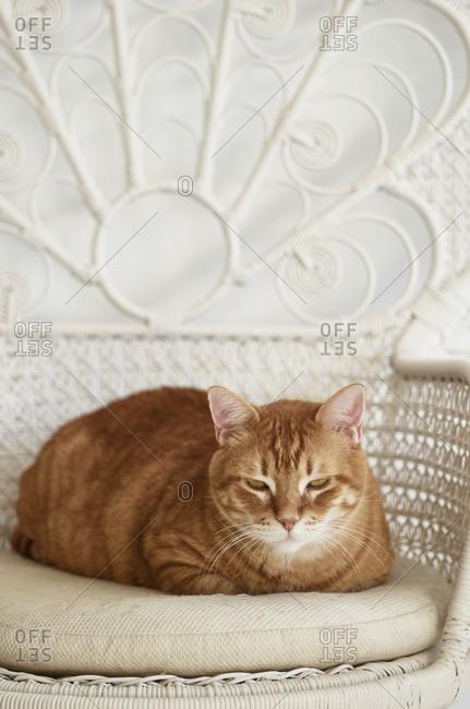 Grumpy orange cat on a chair, Lisbon, Portugal