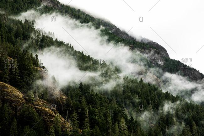 Dense fog on a hillside forest