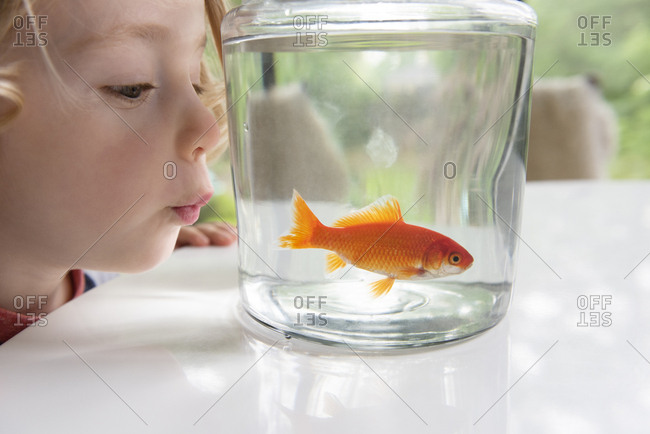 Curious boy looking at goldfish in bowl