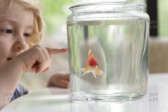 Curious boy pointing at goldfish in bowl