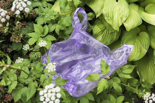 Discarded plastic bag in garden