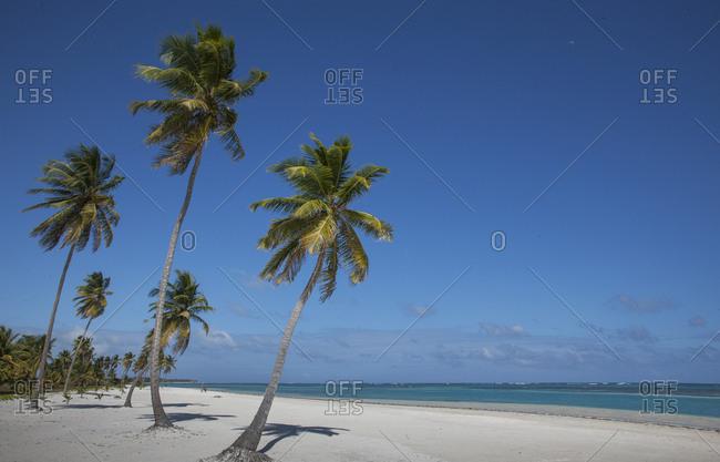 Palm trees on beach in Las Terrenas, Dominican Republic