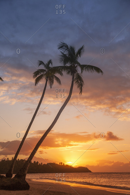 Silhouettes of palm trees on beach at sunset in Las Terrenas, Dominican Republic