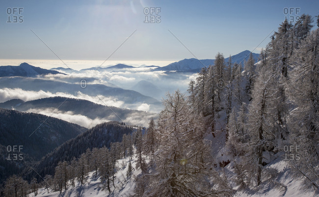 Bare trees and snow on mountain in Piedmont, Italy