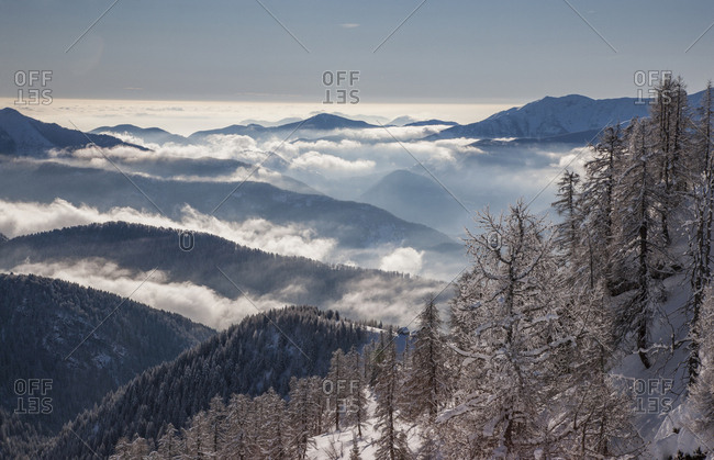 Bare trees by mountains with fog in Piedmont, Italy