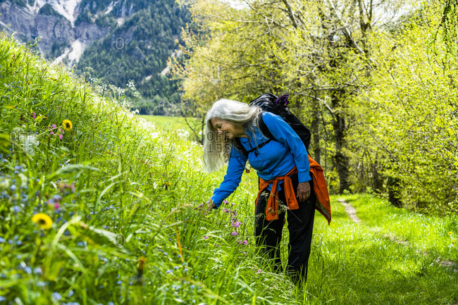 Woman hiking by wildflowers in Dolomites, Italy