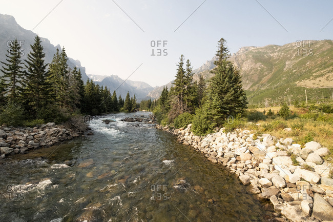 Stream and pine trees in Montana, USA