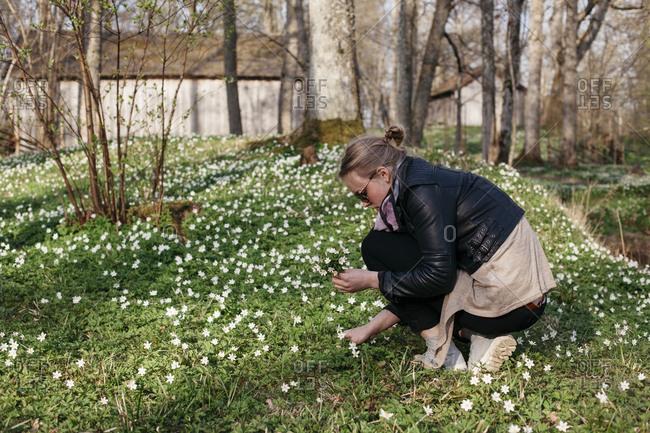 Teenage girl picking wood anemones