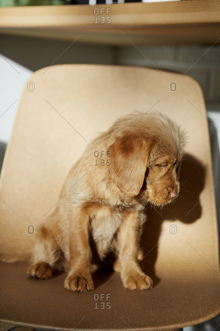 Puppy sitting on chair