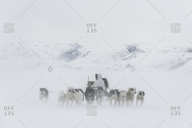 Greenland - May 2, 2014: Dogs pulling sledge