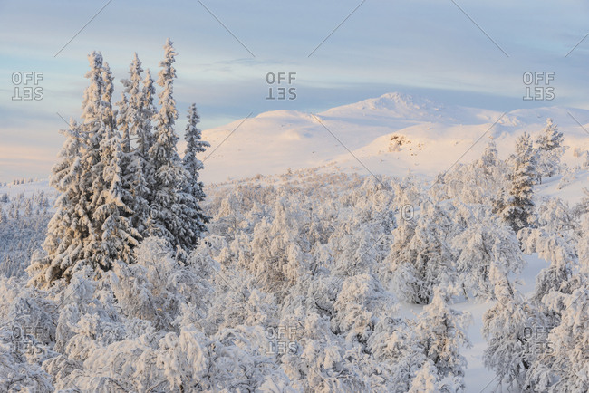 Winter landscape at sunrise