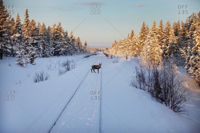 Deer on train tracks