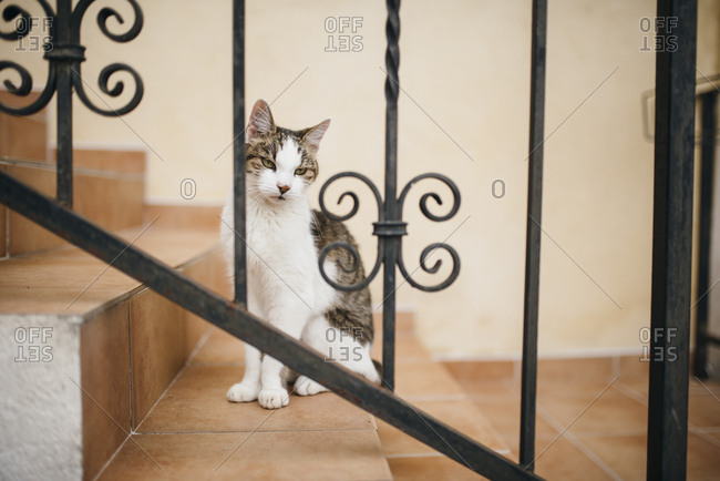 Cat looking on stairs looks through fence