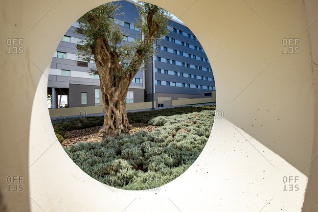 View of an olive tree through a circular window in an area of ??contemporary architecture