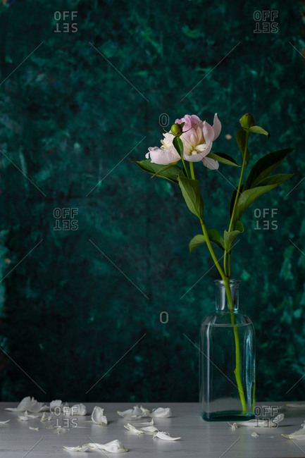 One flower in glass vase against a green background