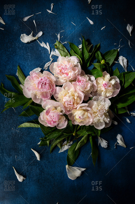 Arrangement of peonies against a blue background