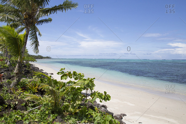 Tropical sandy beach, with green plants and palm trees, Samoa