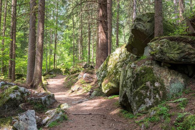 Alpine Forest Path