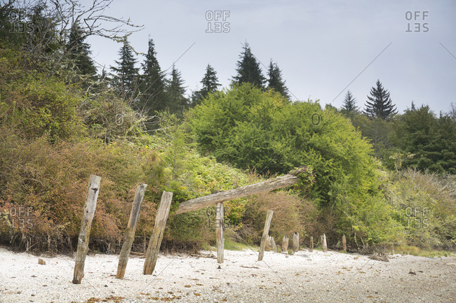 Poles of the First Nations on the shores of Village Island, British Columbia, Canada