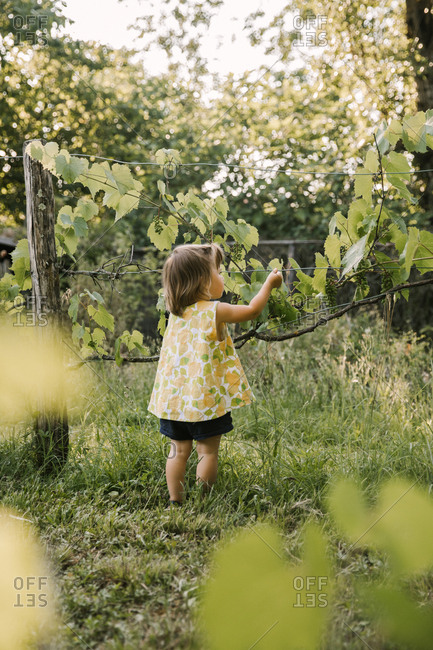 A toddler girl stands in front of a grapevine in France