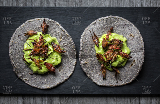 Overhead view of two chapulin tacos with avocado and blue corn tortillas