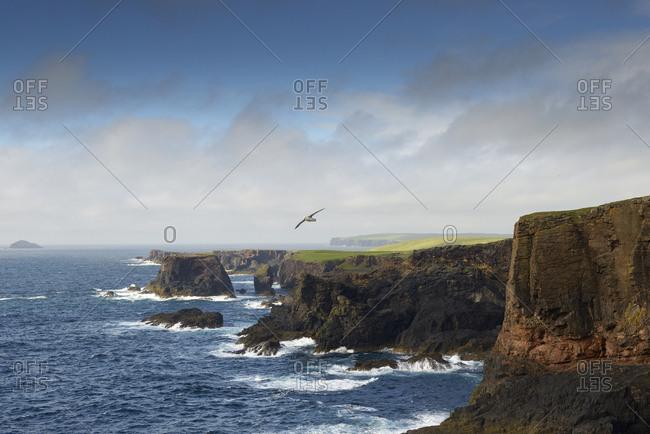 Rocky coastline on Shetland Islands, United Kingdom