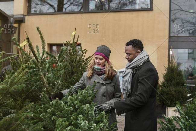 Couple Christmas tree shopping - Offset
