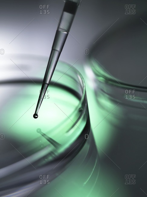 Cells being pipetted into petri dishes containing medium.