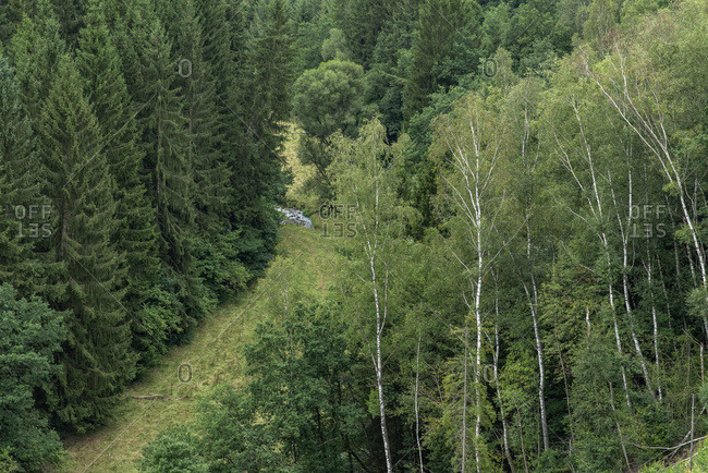 Bird's eye view of a dense green forest and small stream