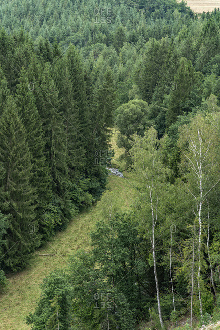 Elevated view of a dense green forest and small stream