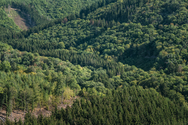 Elevated view of a dense green forest