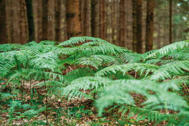 Green fern plants growing in the forest