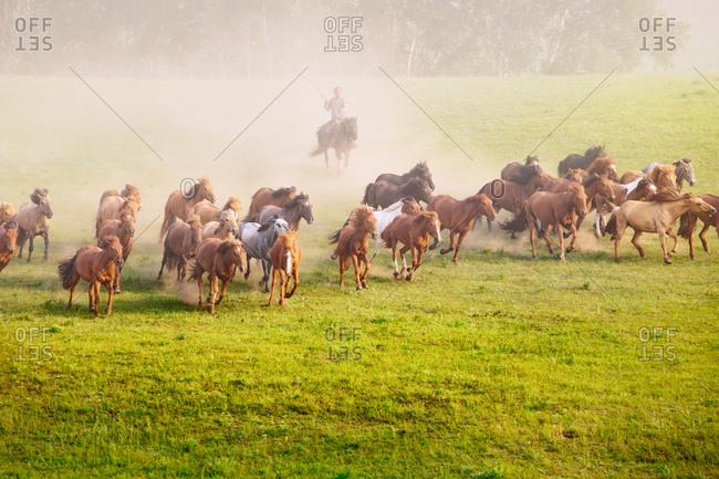 Man herding horses