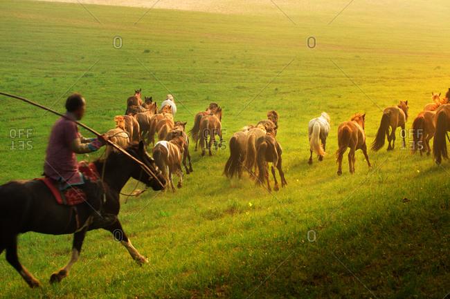 Inner Mongolia horse