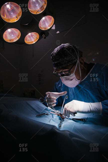 Middle-aged veterinary surgeon in full operation in a veterinary clinic operating room