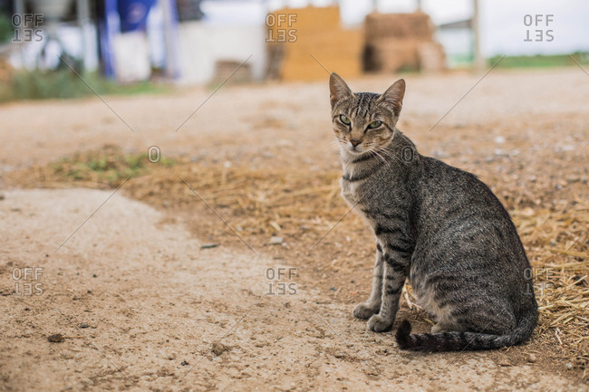 Close-up of a cat lying on the floor of a farm