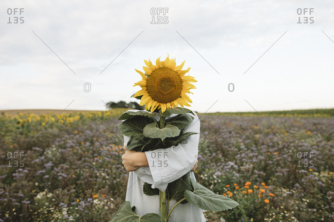 Sunflower covering face of a boy in a field