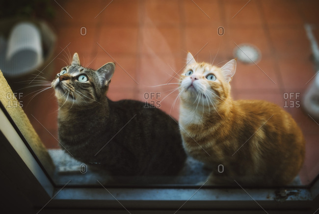 Portrait of two tabby cats waiting behind closed balcony door