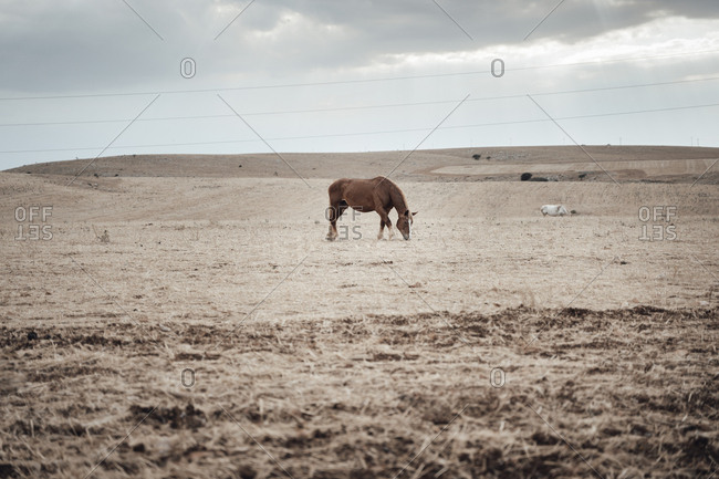 Horse and foal eating hay in wide open landscape